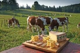 """Résultat de recherche d'images pour """"comté vache"""""""