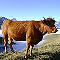 L ' Alpe -Plateau d'Emparis -été 2011 no 7