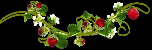 ligne fleur fraise