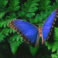 Butterfly (95)