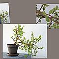 Un petit air de bonsaï