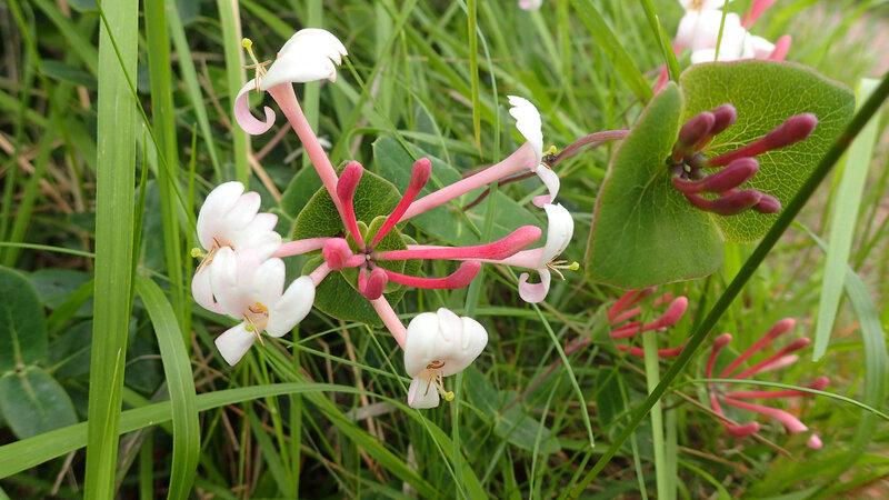 fleurs (5)