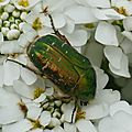 INSECT (246)