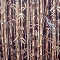 Bambou marron/or