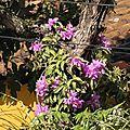 orchidées sur le tronc