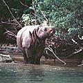 Quel avenir pour les cent espèces les plus menacées ?
