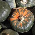 En amérique, les légumes de saison ont une autre dimension