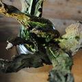 Potée de lentilles et pleurotes, purée de panais et chips de kale