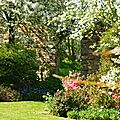 jardin printemps 2009 040