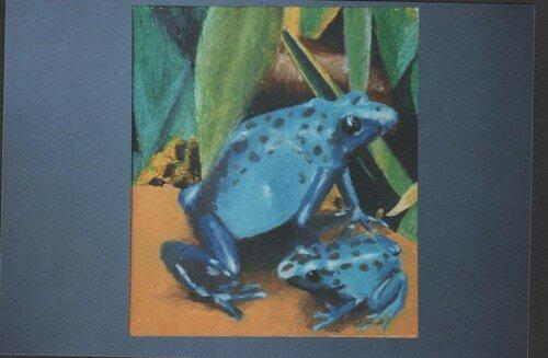 grenouilles bleues