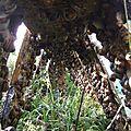 Elevage des escargots