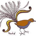 L'oiseau lyre