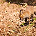 2014-05-30 LUX-1099