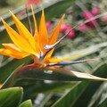 Réunion en Fleur