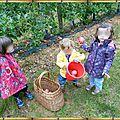 cueillette de pommes à béziers