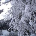 2008 12 22 Du givre sur les branches d'arbres au Pilat