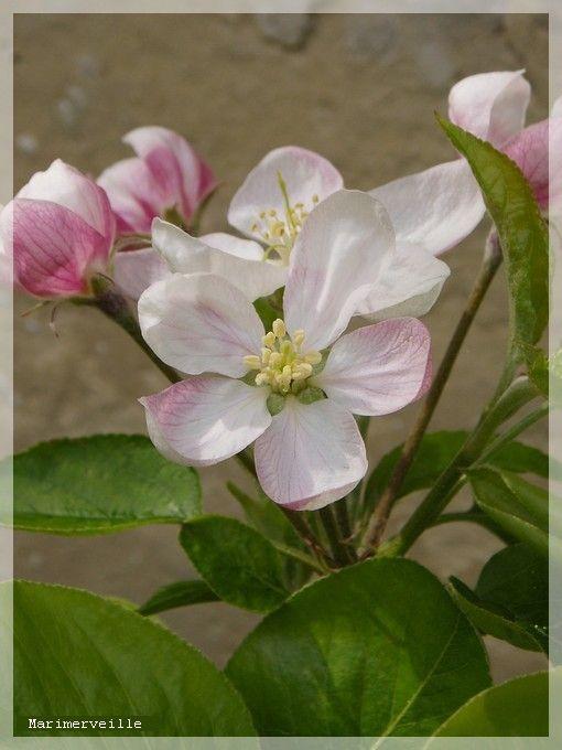 Fleur fraîche
