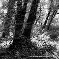 A l'ombre des bois (noir et blanc)