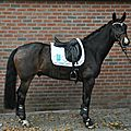 Article Eurodressage : le saddle fitting, côté cheval