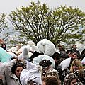 15-Pillow fight 12_4486