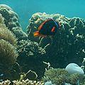 Pulau Kapas, les 4 jours suivants