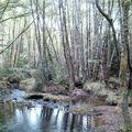 Près du Moulin des Cascades d'Augerolles