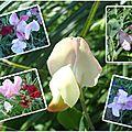 Fleurs 2009-2010 (37)