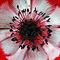 au centre d'une fleur 3