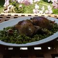 Pigeons à l'étouffée d'oignons et fricassée de petits pois au jambon de bayonne