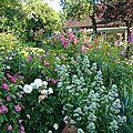 roses et valeriane blanche