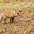 2014-05-30 LUX-1052