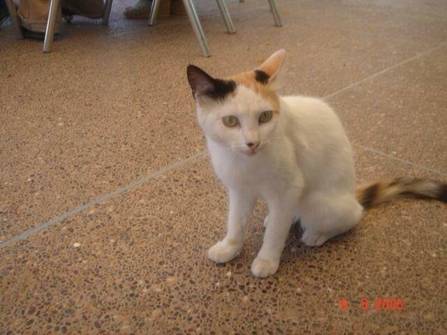 04 Taroudant Chat à Jnan Soussiya 1