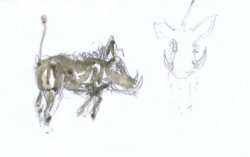 Madikwe bébé phacochère