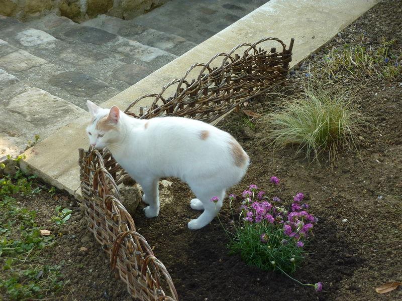 Non, toi Lili, tu jardines pas !