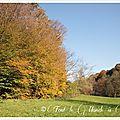 La balade du dimanche : une après midi d'automne à l'etang des princes à raynans (25) pour la 100 ème balade !