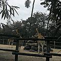 Histoire d'une chacale qui voudrait bien devenir une girafe