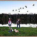 Envolée d'oies bernaches - flying goose geese