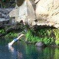 (84) Bassin des aigrettes