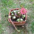 En grande forme : les cactus!
