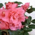 fleurs printemps 2010