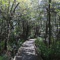 Etang de Léon, chemin des sept paysages, passerelle 2 (40)