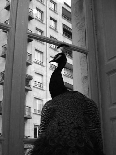 Paris - novembre 2009