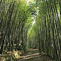 À l'aventure dans les montagnes à Fenqihu, Riufeng et Riuli