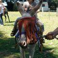 une puce sur un âne