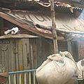 Voyage en inde - kolkata (calcutta) - d'autres rues