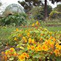 JDP - Ecole Botanique