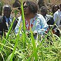 Le MINRESI pour la préservation de l'écosystème marin par la culture du riz de mangrove
