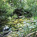 Le Plessis Luzarches - Bois Humide