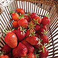 Des fraisiers peu rancuniers...