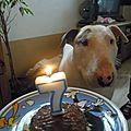 Joyeux anniversaire toby !